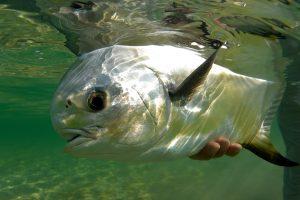 Casa Blanca - Mexico Fly Fishing