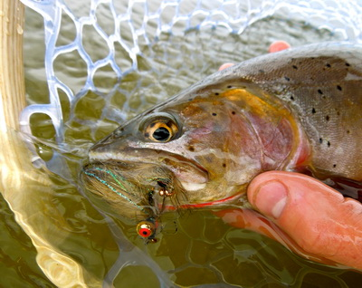 Fishing reports salt river worldcast anglers for Salt river fishing