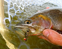 Jackson Hole Fishing Report