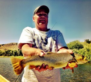 sfbrown trout