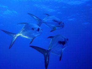 Turneffe Flats - Belize Fly Fishing