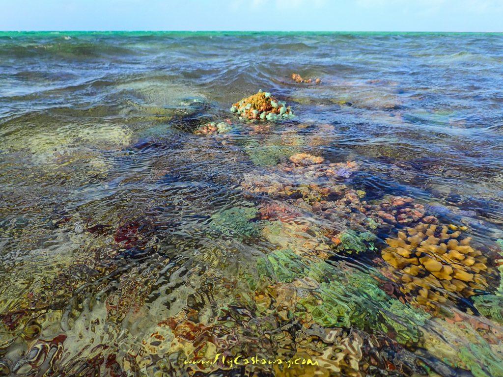 "St. Brandon's Atoll – ""The Best Bonefishing in the World"""
